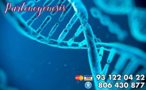 partenogénesis humana