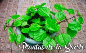 Las plantas que dan suerte en los negocios